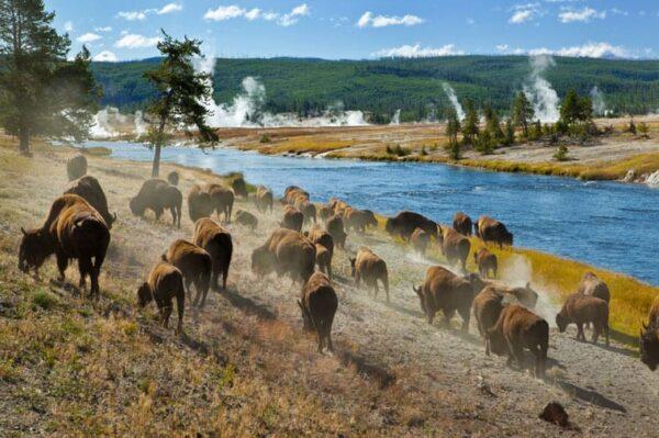 Il Parco di Yellowstone, cosa c'è da sapere