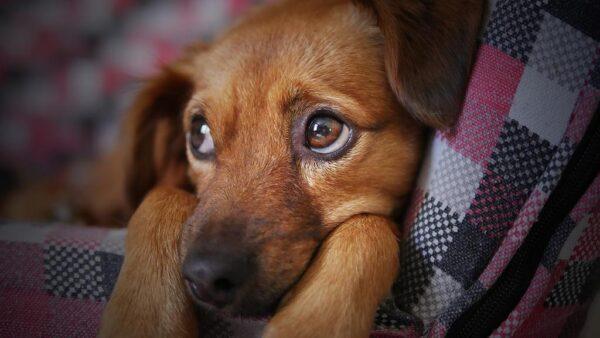 Scienza, gli antibiotici per animali sono rischiosi anche per il padrone