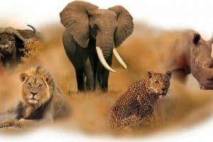 La fauna del Sudafrica: un viaggio dentro il parco Kruger