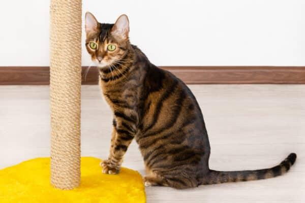 L'importanza del gioco nel gatto